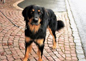 assicurazione cane obbligatoria